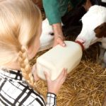 Farm animals at Village Farm Getaway, holidays glamping and luxury camping in East Midlands and Leicestershire