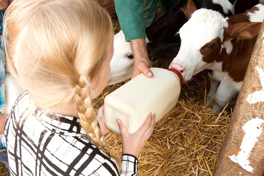 farm-images-feeding