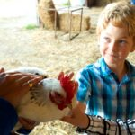 Village Farm Getaway children glamping holidays